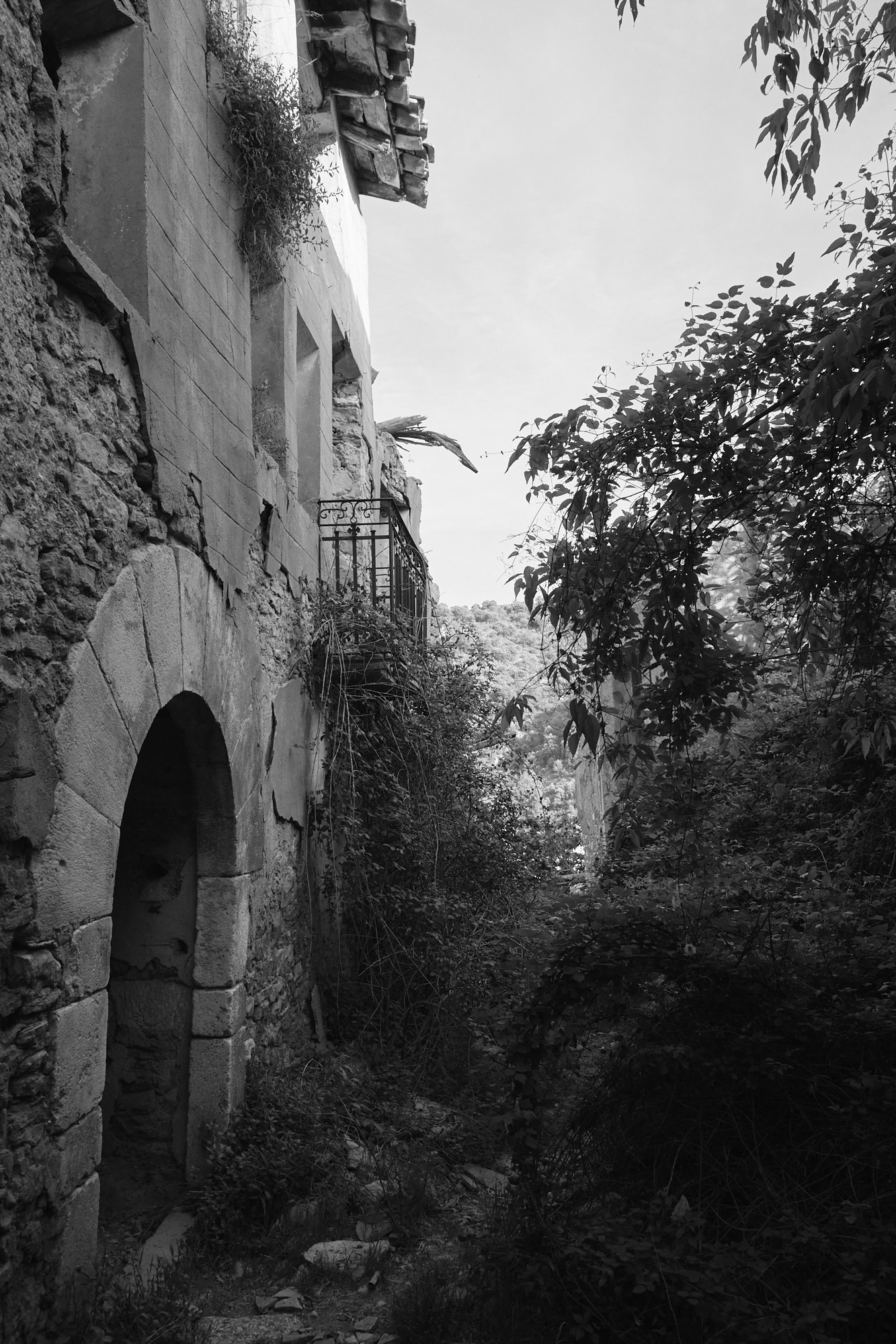 Entrance of a abandon house. The house is taken over by forest.
