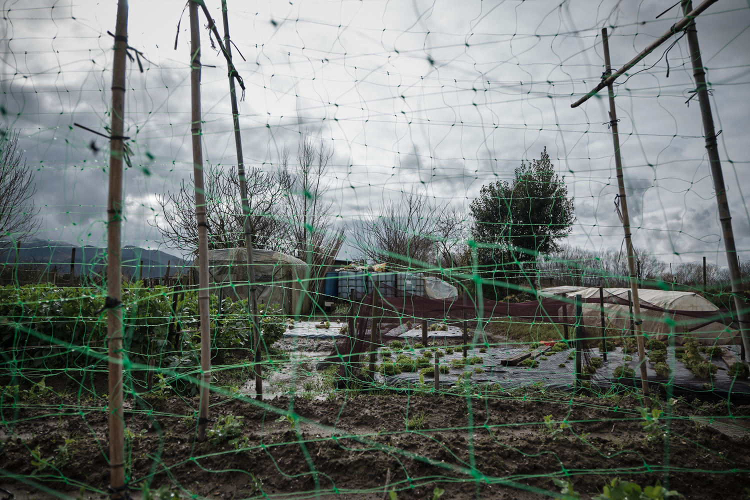 View through a net of a farm land, garden with bamboo sticks.